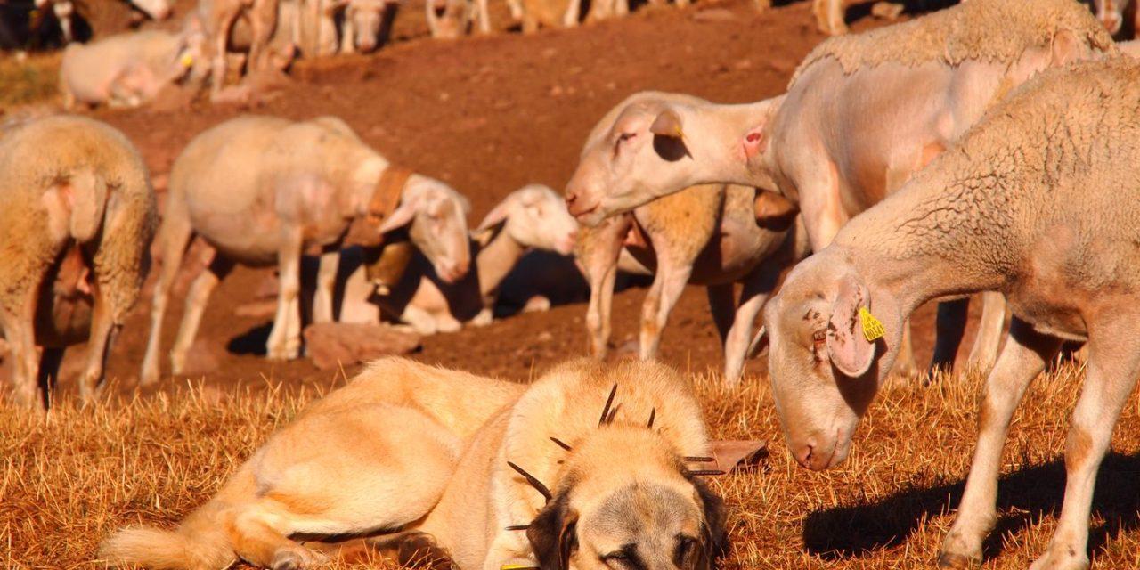 Intervention au Parlement Européen : «Les loups doivent apprendre à respecter des règles dans les paysages d'élevage européens»