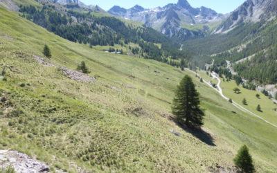 Le diagnostic pastoral de l'alpage de Bois Noir à Ceillac (05) se révèle !