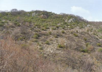 Après le brûlage : la végétation brûlée reprendra d'ici quelques semaines, permettant au troupeau de mieux circuler dans ce secteur précédemment très fermé et d'avoir de la ressource accessible. Ce secteur pourra également servir de pare-feu en cas d'incendie estival