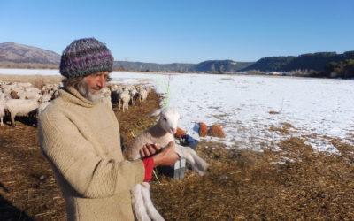 Vaucluse et Bouches-du-Rhône – Pâturer les bords de Durance