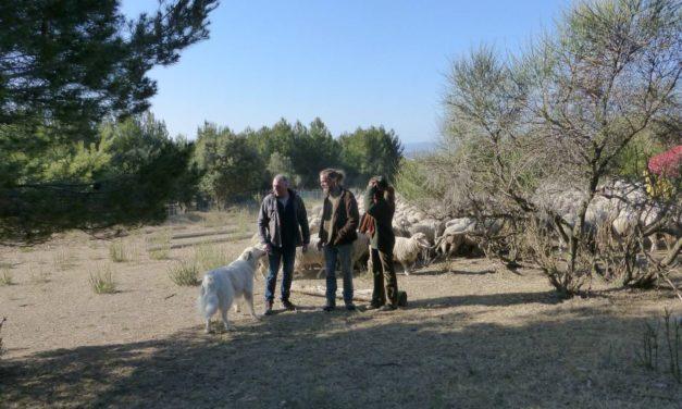 Vaucluse : le Département soutient le pastoralisme