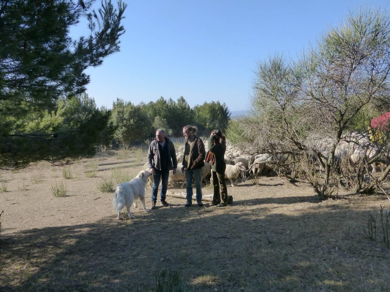 Éleveurs et bergers sur les pares-feux de Grambois