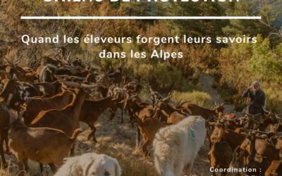 CHIENS de PROTECTION : Quand les éleveurs forgent leurs savoirs dans les Alpes