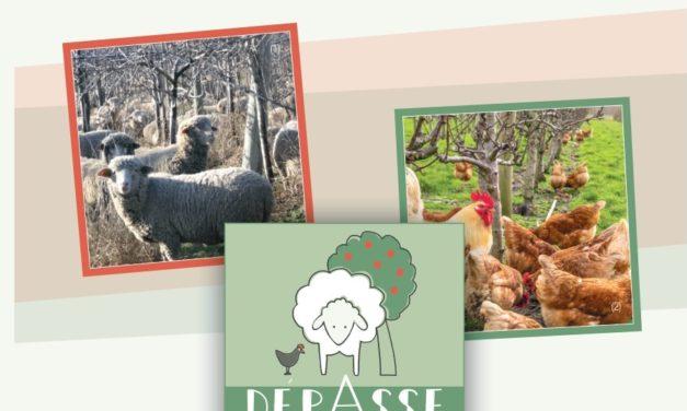 Intégrer des animaux aux cultures pérennes – projet DÉPASSE –