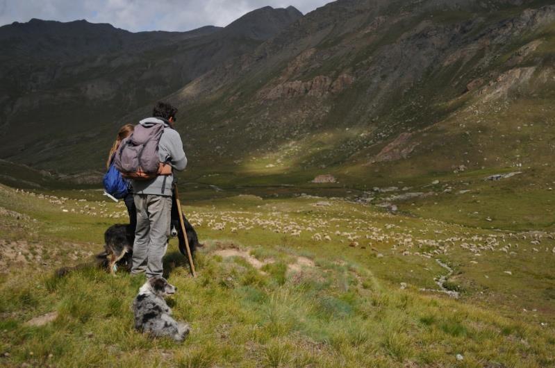 Alpage du Longet (2500 m), Saint Paul sur Ubaye, le 07 Août 2019