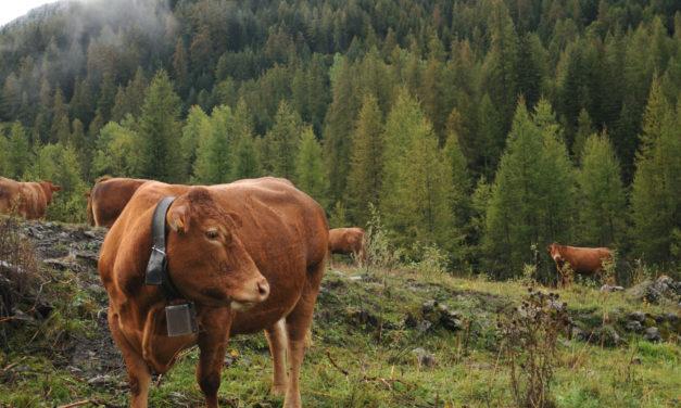 35èmes rencontres nationales de l'Association Française de Pastoralisme