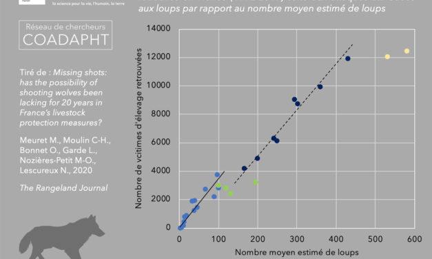 Tirs manqués : la possibilité de tirer sur les loups a-t-elle fait défaut durant 20 ans parmi les mesures de protection du bétail en France ?