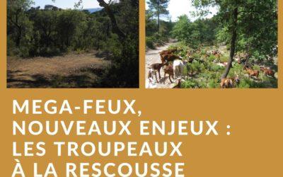 Mégafeux, nouveaux enjeux : les troupeaux à la rescousse de la forêt